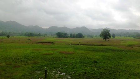 Sadengan ladang penggembalaan Banteng Jawa