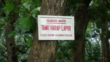 tulisan dilarang masuk di daerah vegetasi trembesi