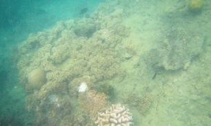 hasil dari snorkeling