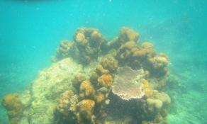 apa lagi yang ini, mirip kayak jamur