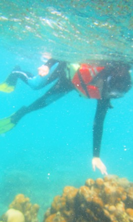 bisa megang karang